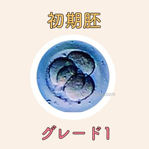 初期胚グレード1(G1)の妊娠率