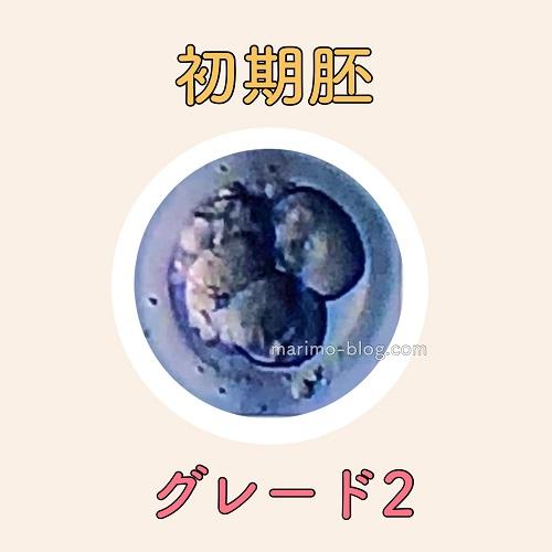 初期胚グレード2(G2)の妊娠率